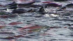Importante contamination de poissons au mercure au nord-est de la