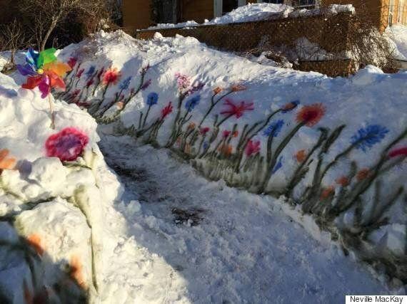 La neige ne peut empêcher les fleurs de Halifax de