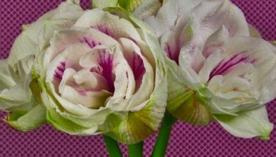 Voyez une multitude de fleurs s'épanouir sous vos
