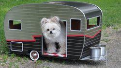 Des remorques pour chiens à 800$