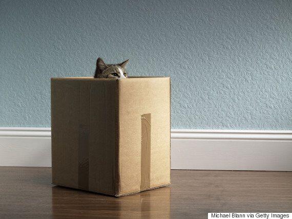 11 bienfaits de votre obsession des chats sur votre