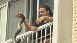 Le python disparu dans Limoilou a été