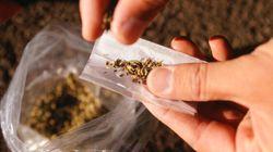 La marijuana, drogue la plus répandue dans l'armée
