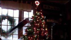 Entre les chats et les sapins de Noël, le combat fait rage