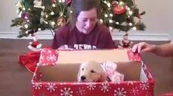 Les chiots font les meilleurs cadeaux