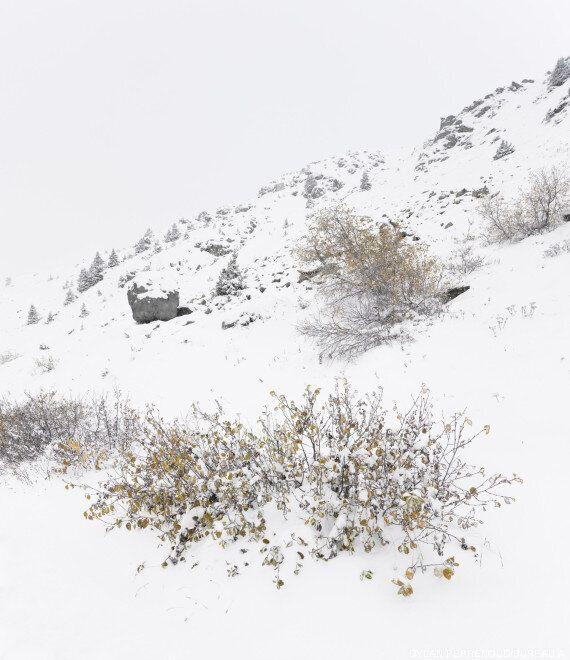 Une cabane en bois camouflée en rocher dans les Alpes