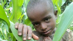 L'insécurité alimentaire s'aggrave malgré la production mondiale record de