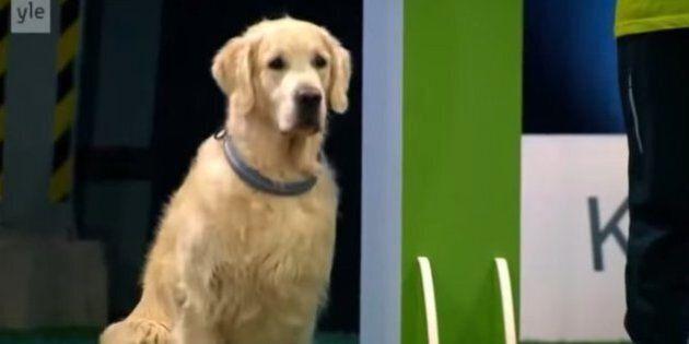 Les 14 meilleures vidéos de chiens de