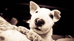 «Il suffit que le proprio apprenne que j'ai un chien pour que mon monde