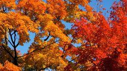 La Gaspésie dans le top 10 pour ses couleurs
