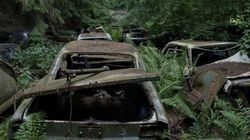 Un mystérieux cimetière de voitures en