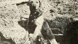 20 PHOTOS d'animaux sur les champs de bataille de la