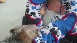 Les chiens savent prendre soin des bébés