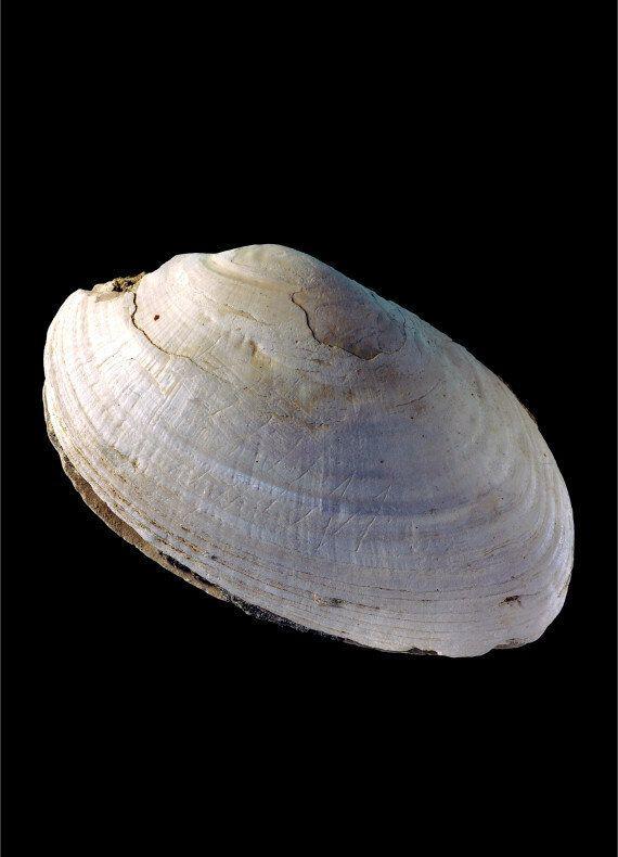 Préhistoire: Voici la plus vieille gravure humaine connue à ce jour