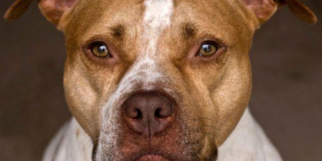 La SPCA de Montréal lâche Outremont parce qu'on y interdit les