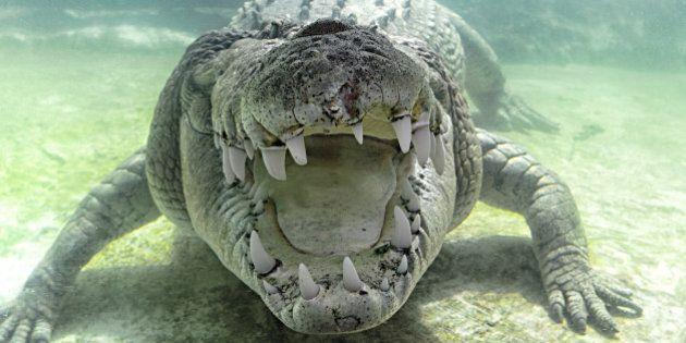 Un golfeur meurt attaqué par un crocodile en Afrique du
