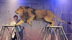 Festival international de cirque Vaudreuil-Dorion: ça commence
