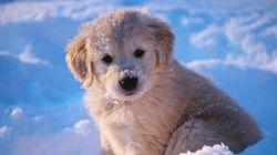 L'hiver sera plus froid que la normale dans plusieurs régions du Canada selon