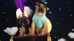 Des chiens en costume recréent des films de Disney