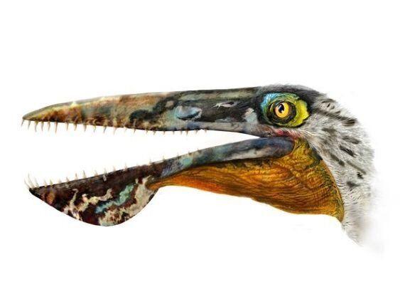 «Ikrandraco Avatar»: un dinosaure baptisé d'après le film de James Cameron
