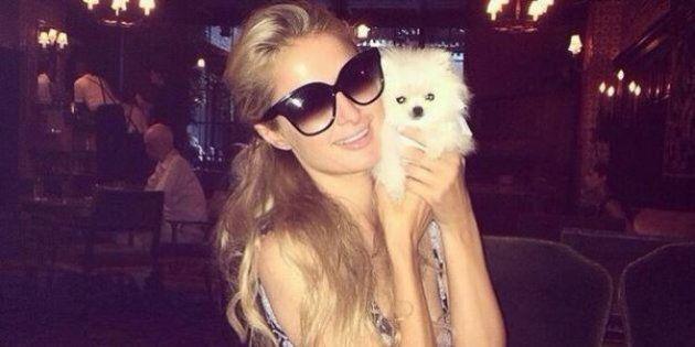 Paris Hilton dépense 13 000 $ pour un