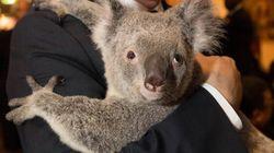 Au G20, l'Australie invente «la diplomatie du koala»