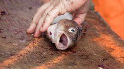 Golfe du Maine: interdiction de pêche à la morue dans certaines