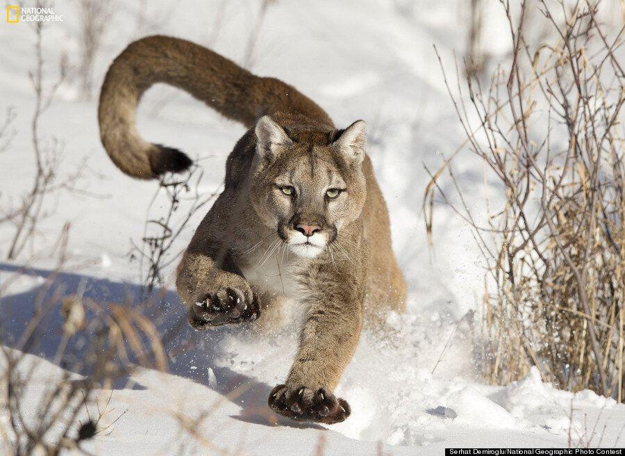 10 PHOTOS de la vie sauvage à couper le