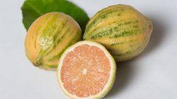 7 variétés d'agrumes que vous ne connaissez peut-être pas