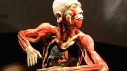 Une enquête sur l'exposition «Bodies Revealed»