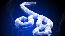 Ebola : un nouveau cas confirmé au