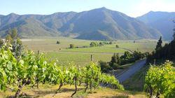 8 vignobles incontournables du Chili