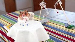 Un mini hamster qui mange des mini burritos sur une mini table