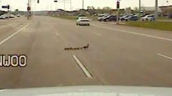 Un policier bloque la circulation pour laisser passer des canards