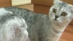 Ce chat réalise qu'il est... un chat