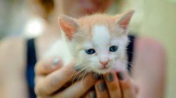 Un vétérinaire recommande des contraceptifs pour les