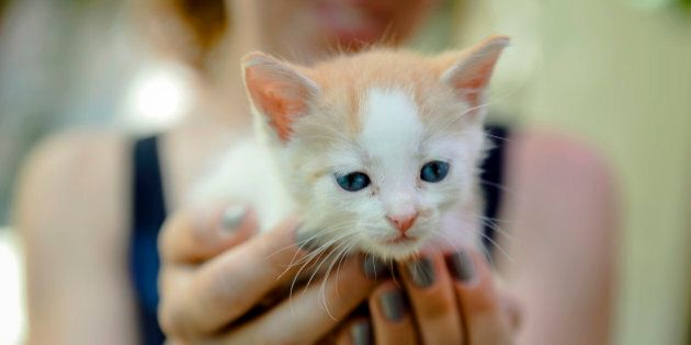 A woman holds a kitten during a stray cat adoption event organized by the Streetcats volunteer association...
