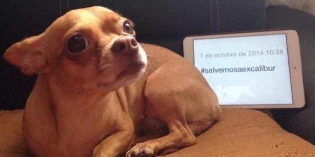 «Sauvons Excalibur»: les internautes se mobilisent contre l'euthanasie du chien de la malade