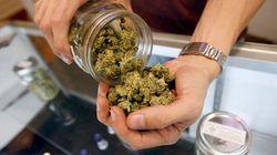 Cannabis: Les médecins reçoivent des