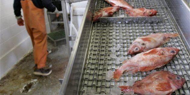 La consommation mondiale de poissons a grimpé, selon un rapport de l'Organisation des Nations