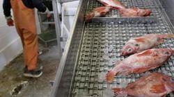 La consommation mondiale de poissons à la