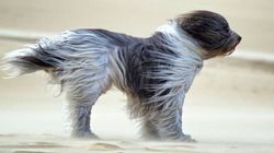 Ce chien a bien fait rigoler le Web