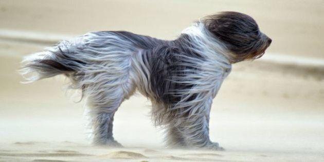 Ce chien bravant le vent a bien fait rigoler le Web
