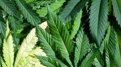 Les boutiques de marijuana interdites dans le «Red Light»