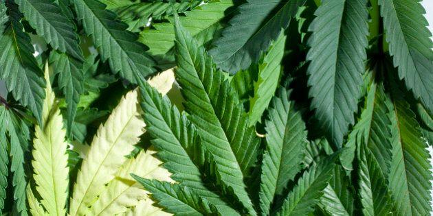 Les boutiques de marijuana sont interdites dans le «Red Light»