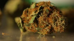 Manifs pro-marijuana dimanche au