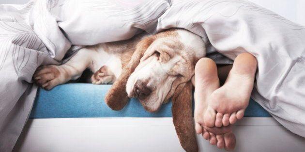 Dormir avec votre chien ou votre chat n'est peut-être pas une bonne