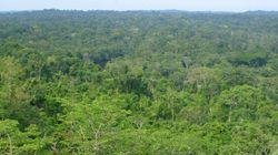Brésil: baisse de 18% la déforestation en