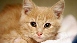Un chaton disparu est retrouvé 3700 km plus