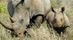 Ne partagez pas vos photos de safaris, les braconniers utilisent la